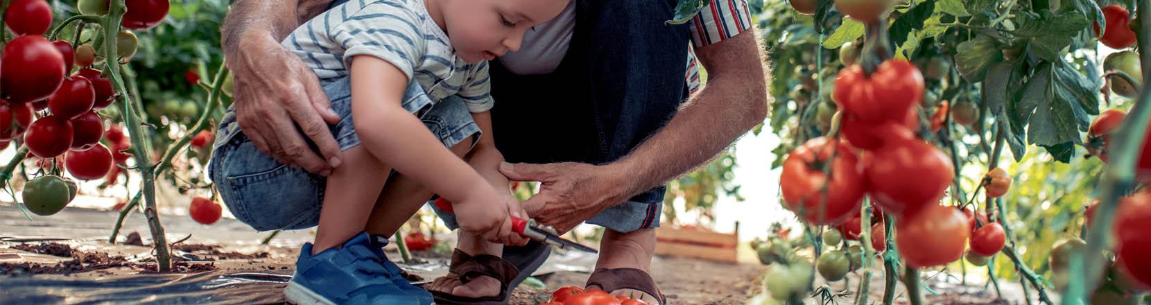 Fai da mediatore: il nonno sta vicino al nipote mentre usa forbici da giardiniere (cesoie)